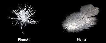 tipos de pluma